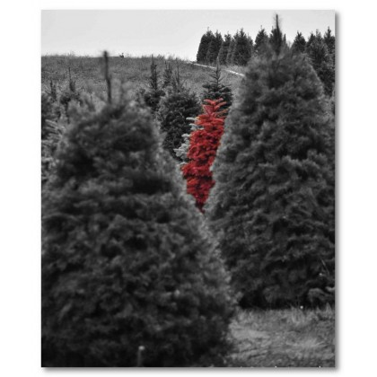 Αφίσα (φύση, τοπίο, δάσος, δέντρο, μαύρο και άσπρο)